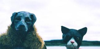 Miss Cat e o Rapz Cão